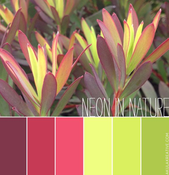 a nature-inspired neon color palette