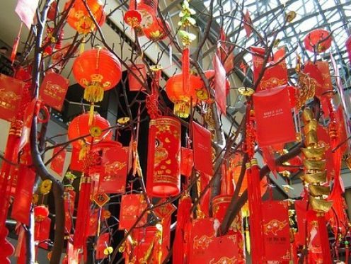 Chinese money tree! | Jevin\'s Last | Pinterest
