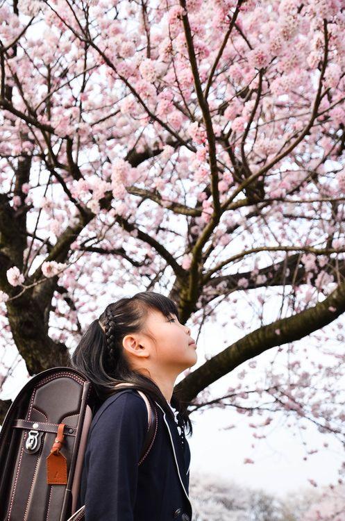 Japan On Tumblr Sakura Tree Tree Photography Japan