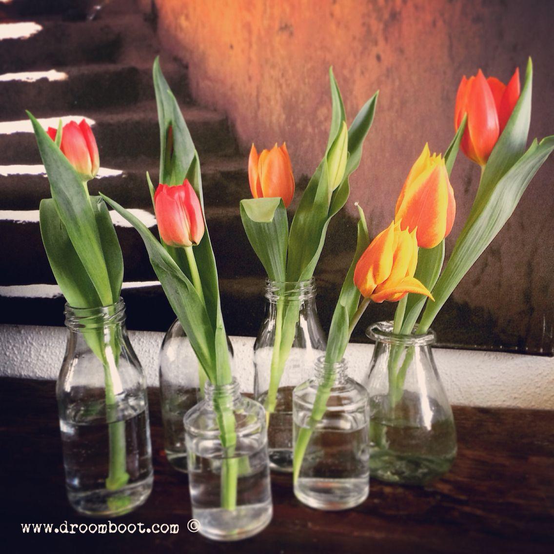 Tulips from Amersfoort ;-)