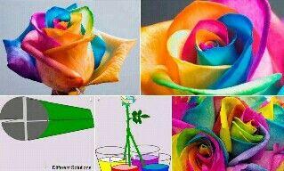 rosas de colores DIY