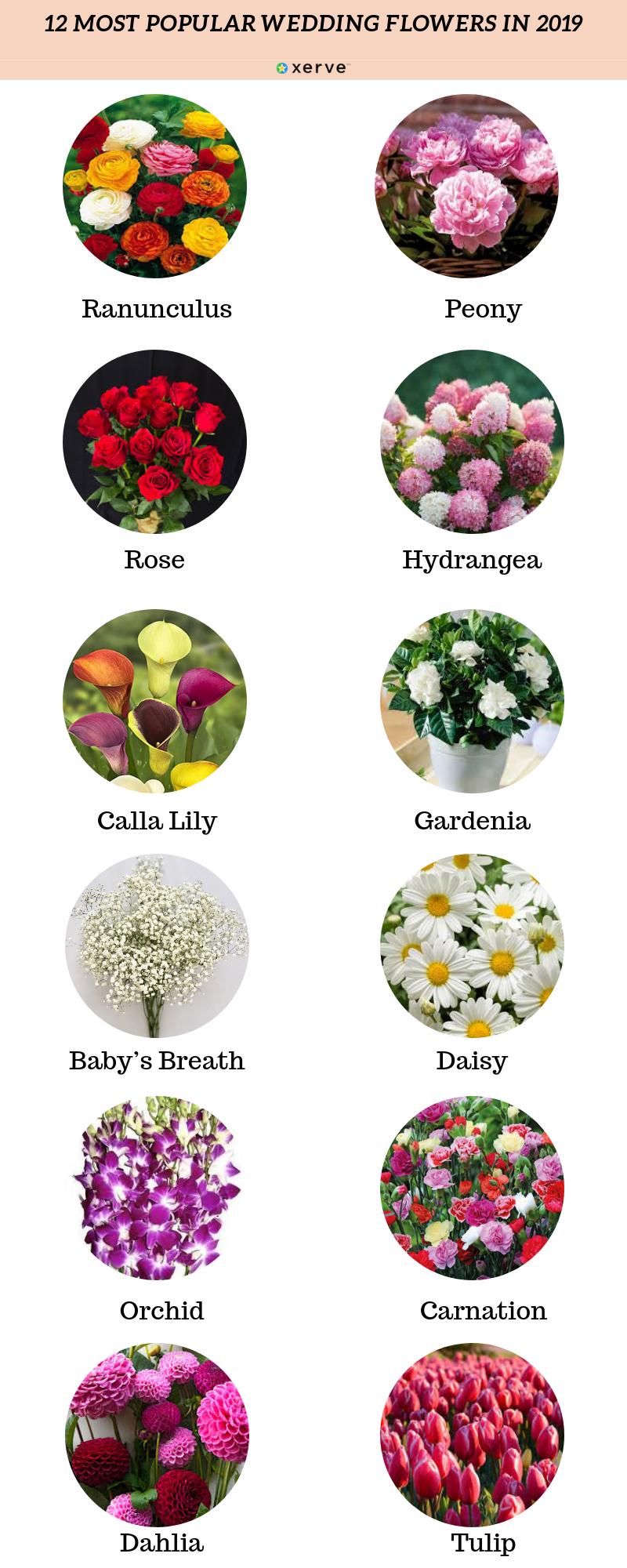 The 12 Most Popular Wedding Flowers In 2019 In 2020 Wedding Flower Types Wedding Flowers Popular Flowers