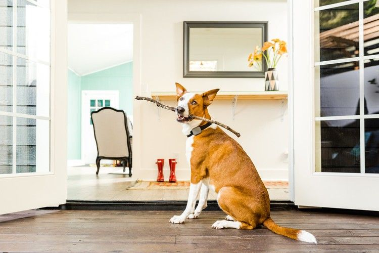 4 Smart Devices to Make Pet Care a Breeze — Dwell #smartdevice