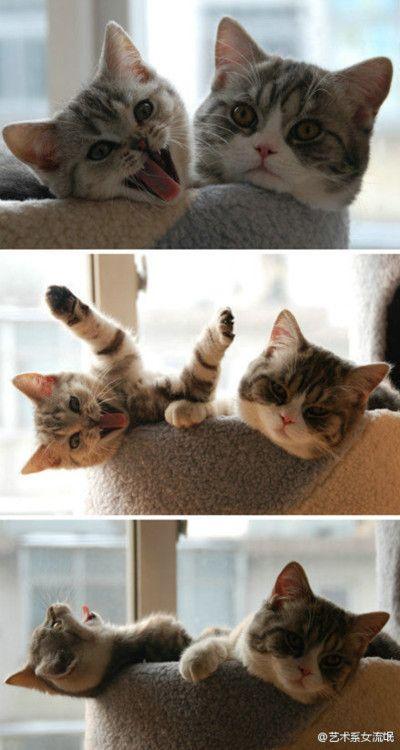 hahaha ... funny kitty