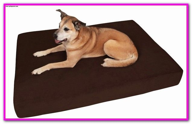 Cheap Extra Large Plastic Dog Beds Free Delivery And Returns On
