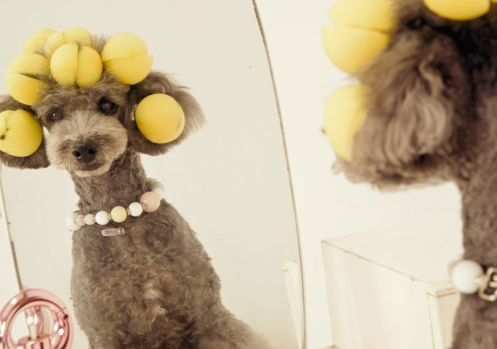 DRESS UP POODLE