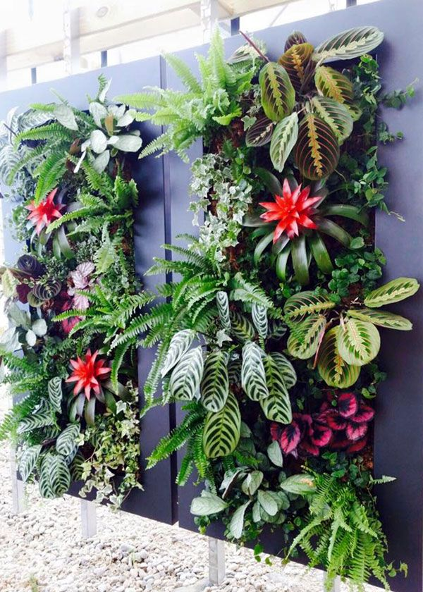 Cuadros vivos florister a amazonia ecosistemas for Jardin vertical materiales