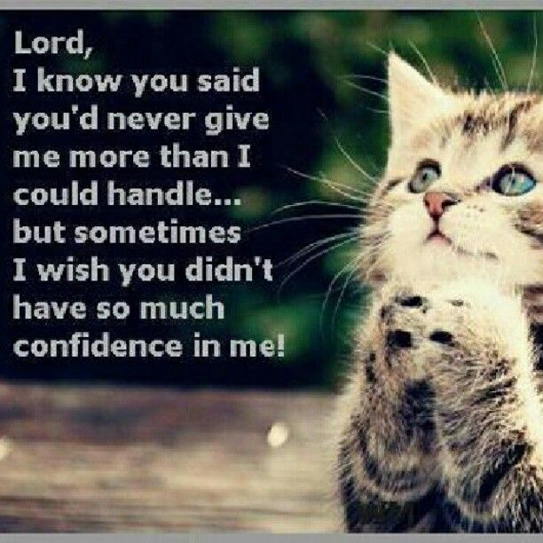 Cute Cat Pictures with Sayings | love #wise #wisdom #cat # ...