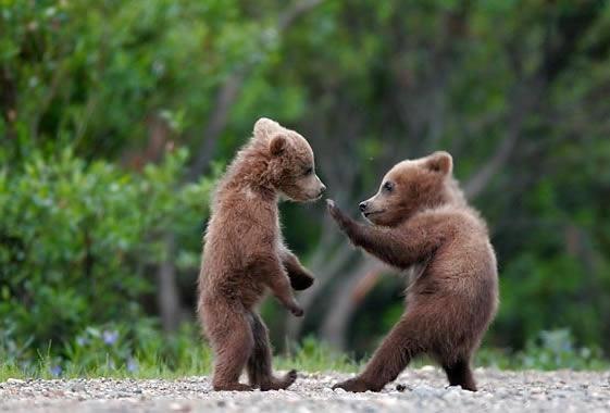 Kung fu baby bears