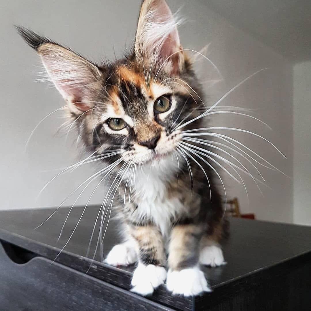 Hi there my little feline friend ️😻 Kittens cutest