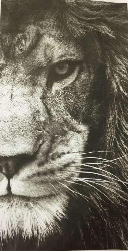 28 Ideas tattoo lion king kitty