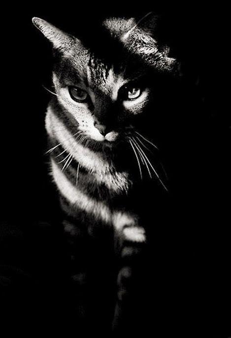 Wonder If His Her Name Is Shadow Koshachi Fotografii Koshki