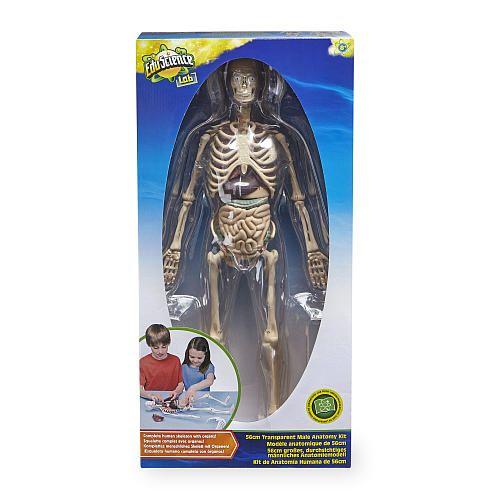 Edu Science Human Anatomy Kit Toys R Us Toys R Us