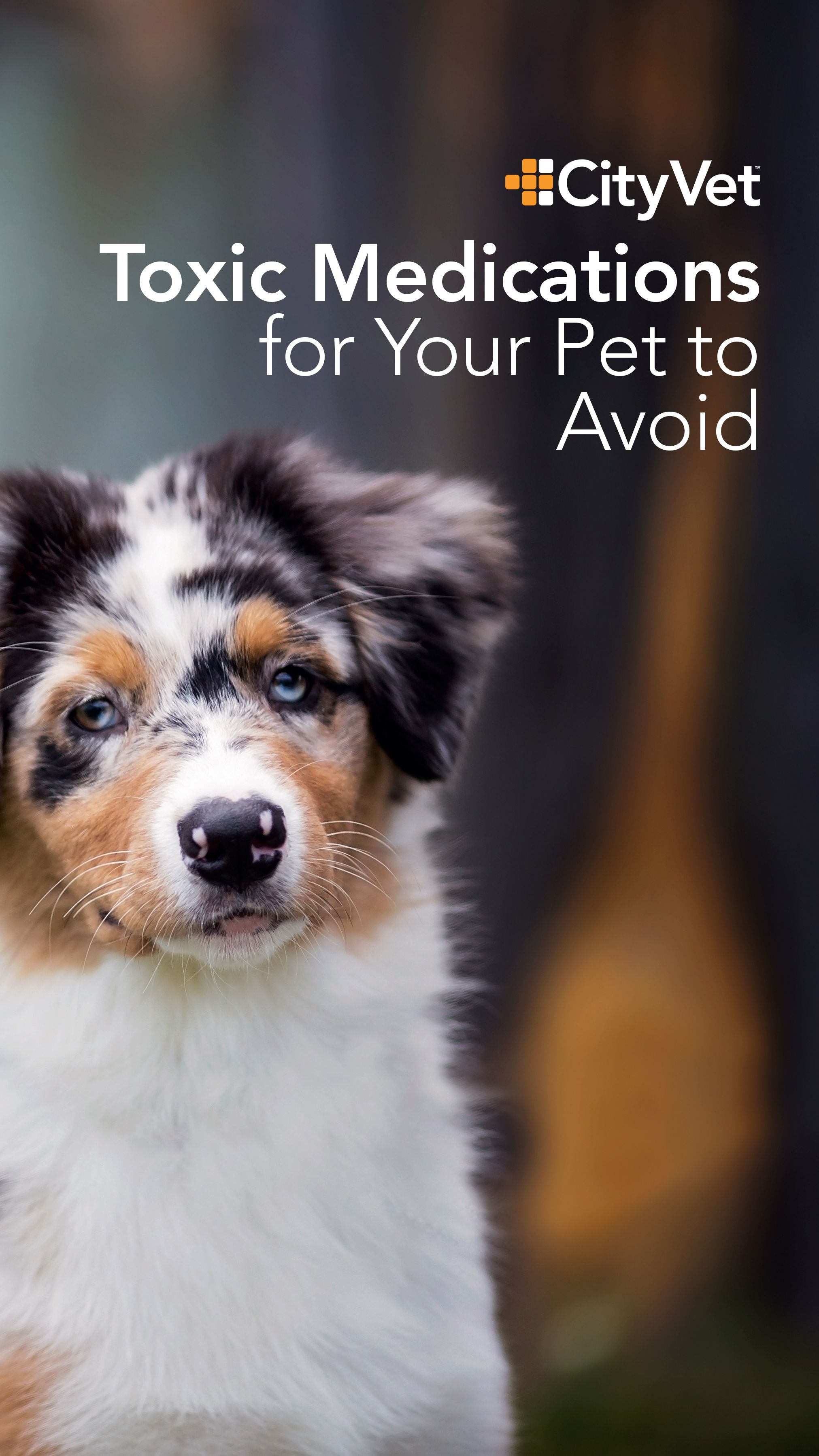 Make Sure To Steer Your Pet Clear Of These Over The Counter Medications Your Pet Medical Pet Health
