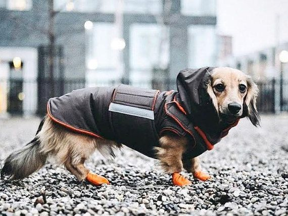 Dachshund Dog Raincoat With Hood And Neck Warmer By Pepperpetwear