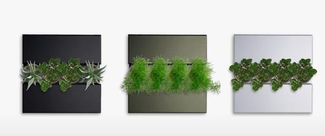 Unusual Vertical Wall Plants Innovation Ideas   Home Improvement Inspiration