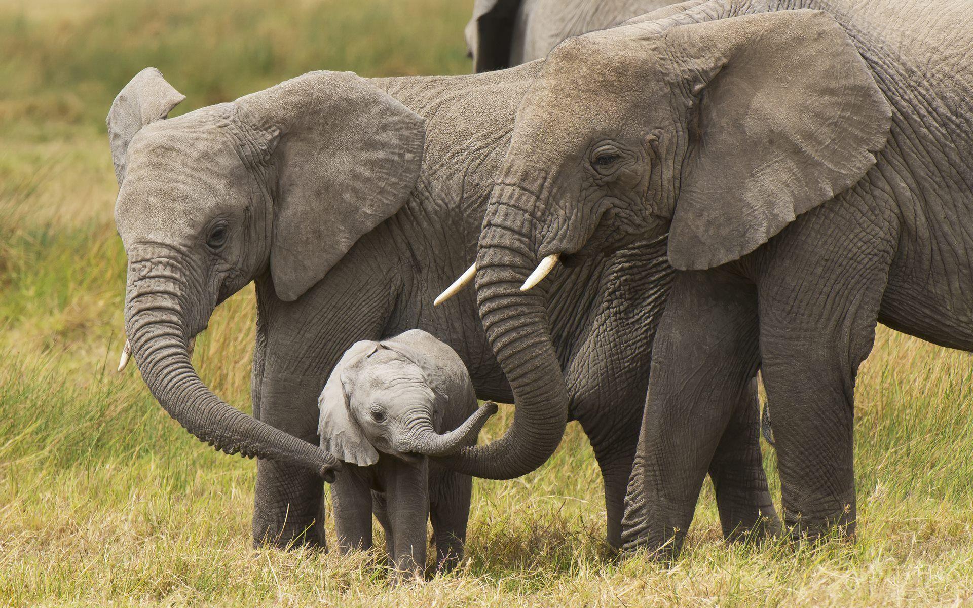 Cute baby elephant wallpapers hd disney elephant - Baby elephant wallpaper ...