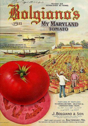 Best Heirloom Seeds and Organic Seed Companies | Organic ...