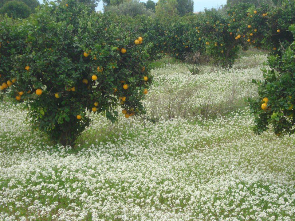 Huerto naranjos