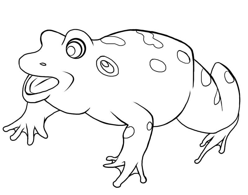 Frog, Bull Frog Coloring Page: Bull Frog Coloring PagesFull Size ...