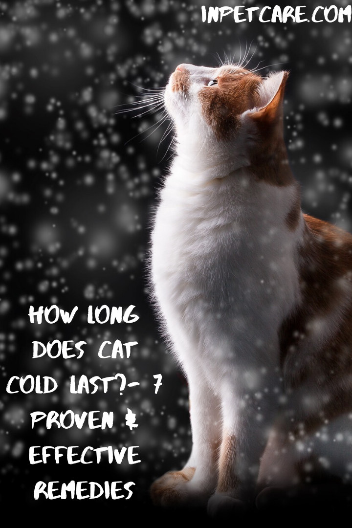 How Long Does Cat Cold Last? 7 Proven & Effective