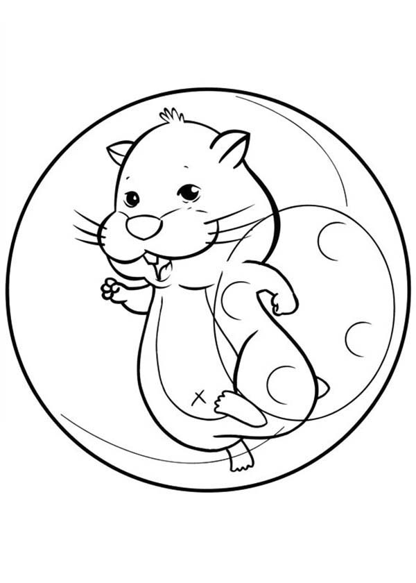 Smiling Hamster Pet Coloring Page Coloring Sky In 2020 Coloring Books Coloring Pages Coloring Pictures