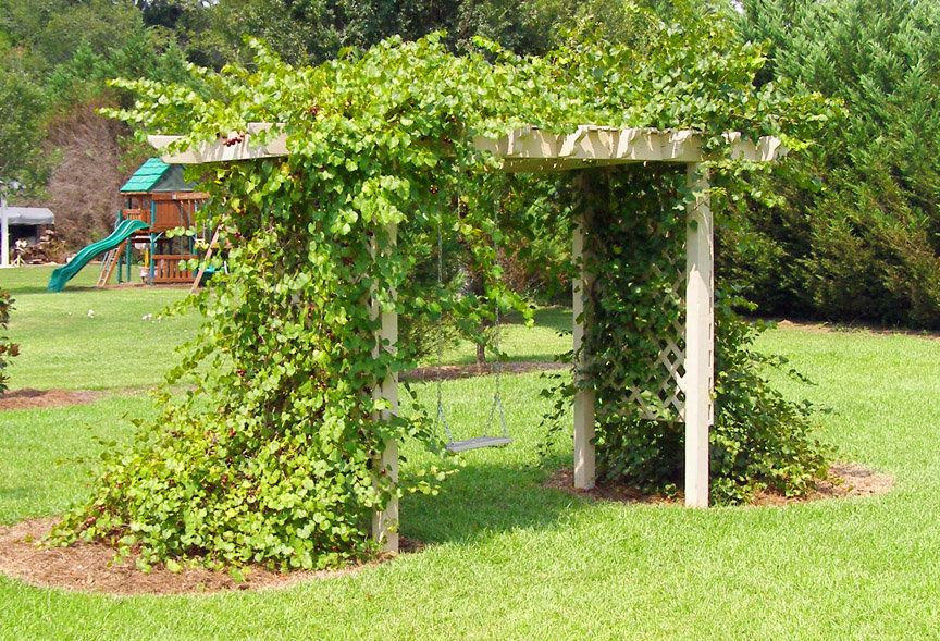 arbors for grape vines Trellis and Grape Arbor by
