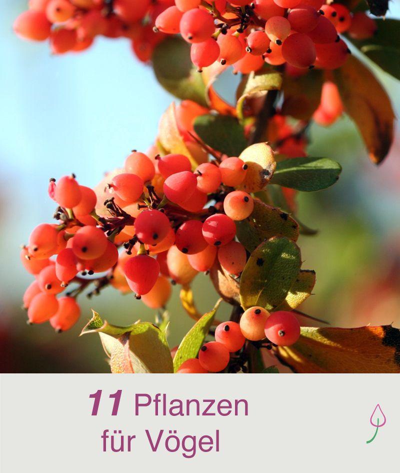 11 str ucher f r v gel im garten gardening pinterest garten garten ideen and garten pflanzen - Einheimische pflanzen im garten ...