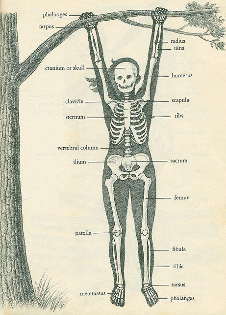 the swinging girl skeleton | Anatomía, Biología y Medicina