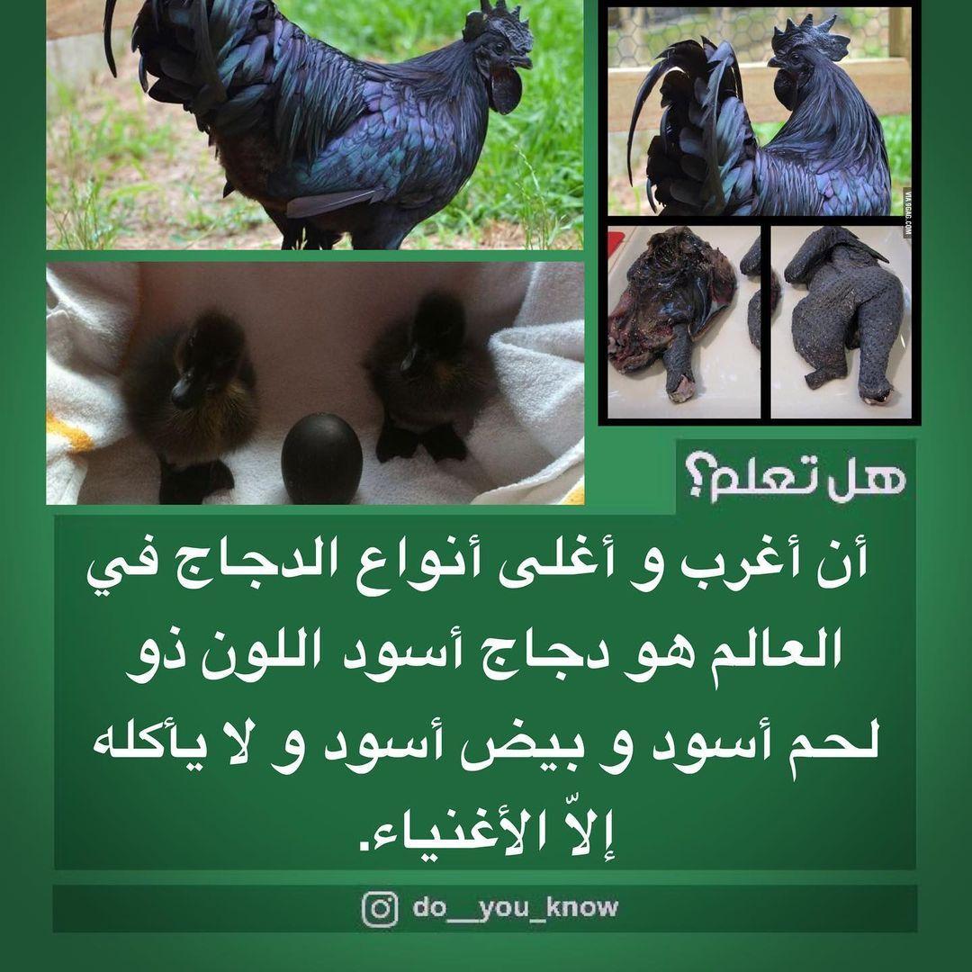 Do You Know هل تعلم On Instagram أن أغرب و أغلى أنواع الدجاج في العالم هو دجاج أسود اللون ذو لحم أسود و بيض أسود و ل Garden Sculpture Outdoor