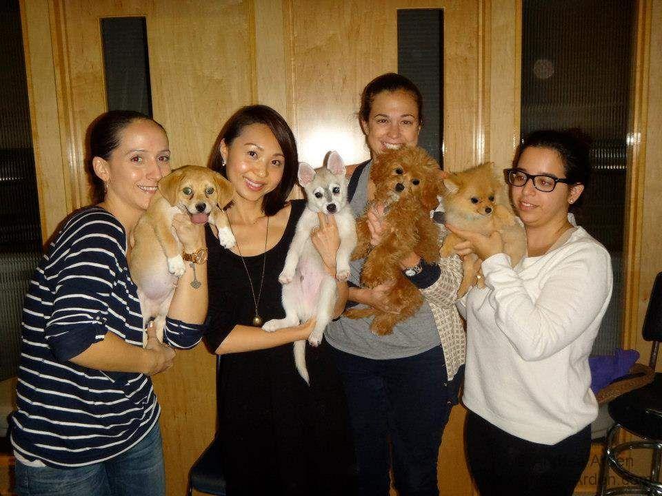 Puppy Socialization Classes Nyc Ideas