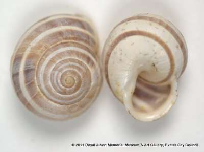 Miss Linter Started Her Shell Collecting In The 1800s And