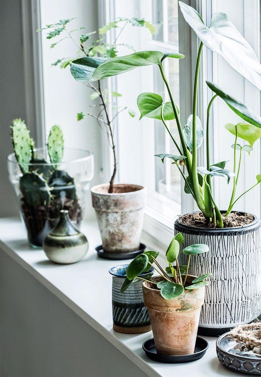 Selv Om Selve Kokkenet Er Meget Almindeligt Har Vi Gjort Det Til Vores Helt Eget Vaxt Inredning Plantera Blommor Inomhusvaxt