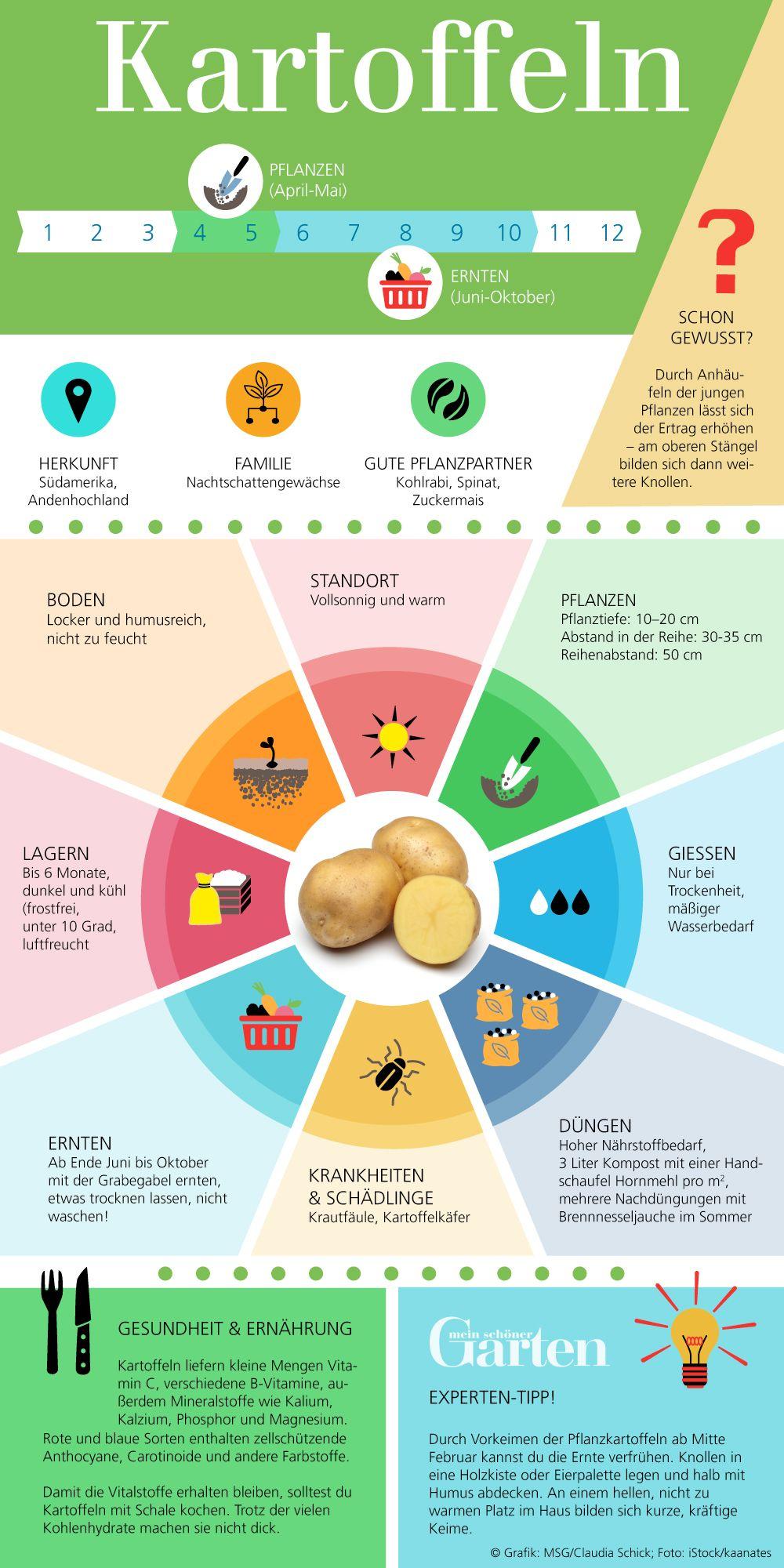 Kartoffeln: Vielseitige Knollen