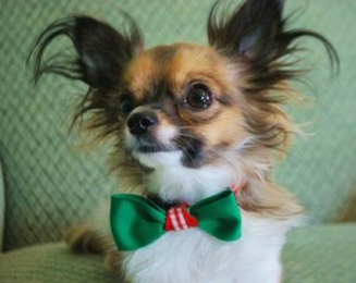 Christmas Bow Tie Collar for Boy Dogs