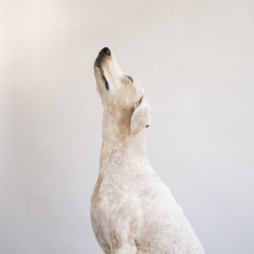 The New Victorian Ruralist Dogs Beautiful Dogs Animals Beautiful
