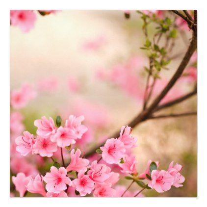 Unduh 1040+ Wallpaper Bunga Azalea HD Terbaru