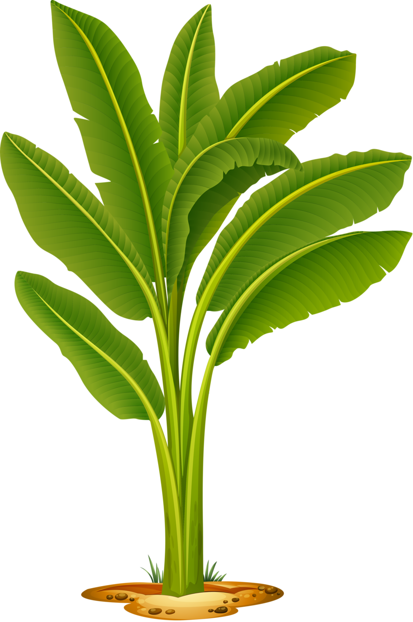 Pin On Clipart Trees And Leaves