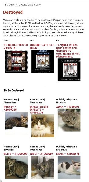 """4/6 SUPER URGENT 4/6 10 BEAUTIFUL LIVES OF CATS TO SAVE 4/6TO BE DESTROYED STARTING12NOON ,PLEASE SAVE US WE ONLY HAVE A FEW MINS / HOURS TO LIVE BEFORE WE GO TO CAT HEAVEN THANK YOU.THIS SHELTER IS A HIGH KILL FACILITY SO TIME IS CRITICAL, Please Share Irish. ALL LOCATIONS: Shelter closes at 8pm. Go to the ACC website( http:/www.nycacc.org/PublicAtRisk.htm) ASAP to adopt a PUBLIC LIST cat (noted with a """"P"""" on their profile) and/or work with a rescue group if you can adopt/foster ANYof our…"""