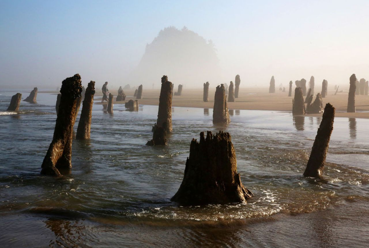 Ghost forest emerges from the sand on the Oregon coast