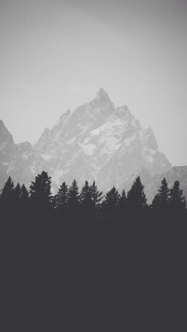Black White Forest And Mountain Iphone Wallpaper Background