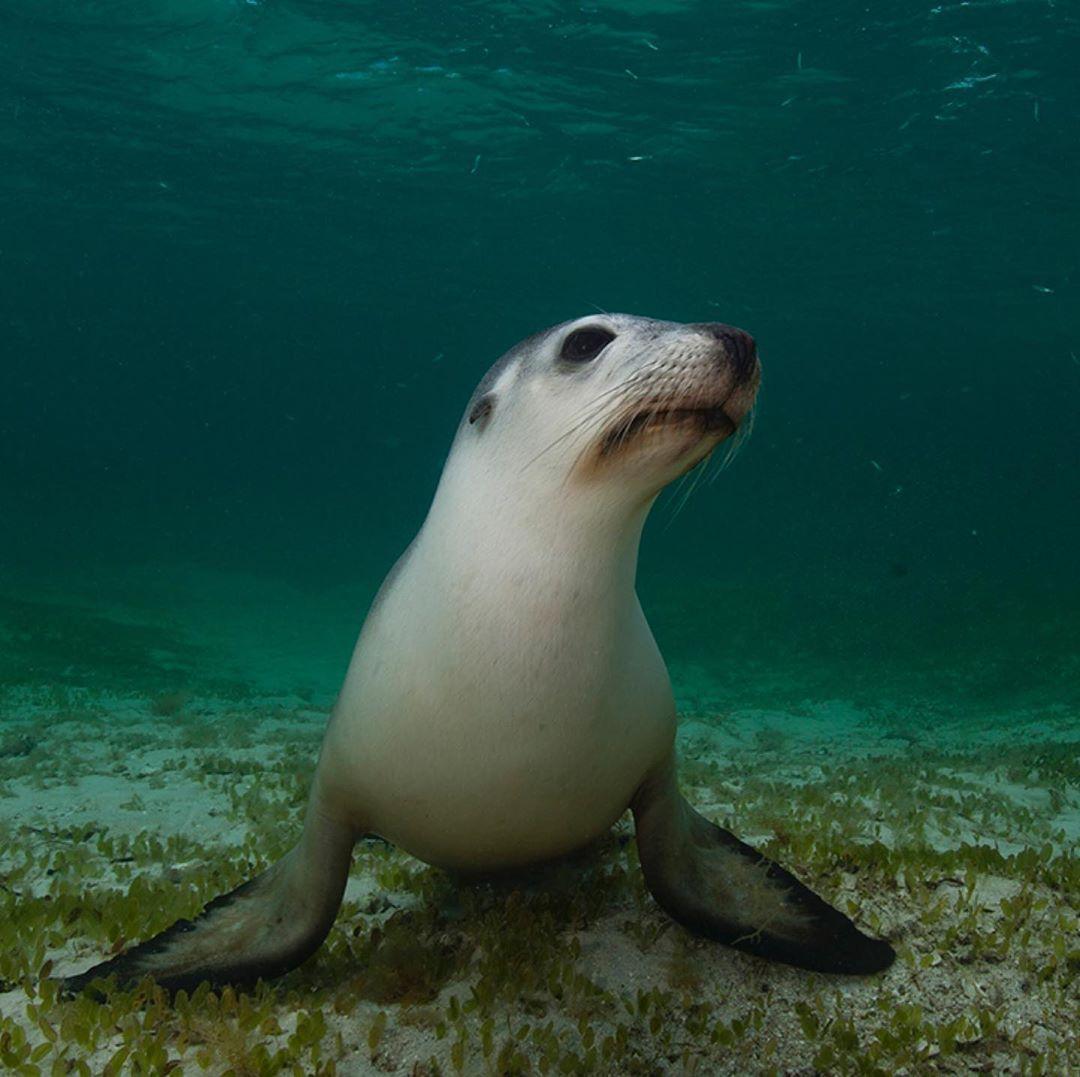 Pin En Under The Sea