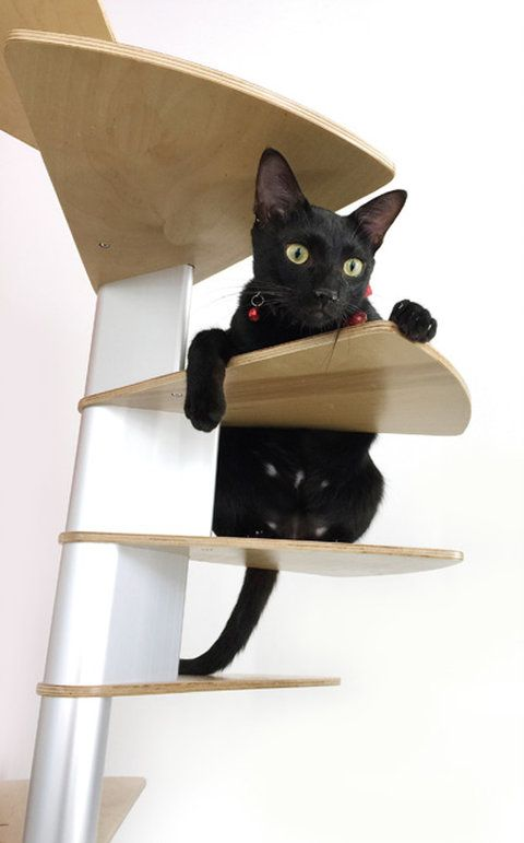Best Catswall Modular Cat Spiral Staircase Animal Room Cat 400 x 300