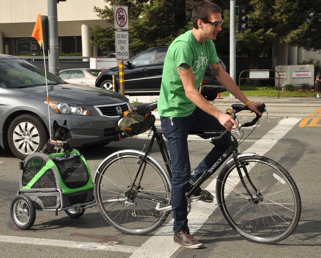Pull Behind Dog Bicycle Trailer If You Love Your Dog And Want To