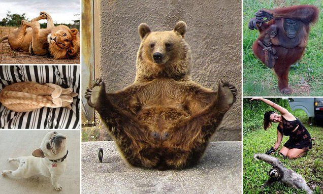 Bears, dogs, monkeys and cats show off their yoga moves ...