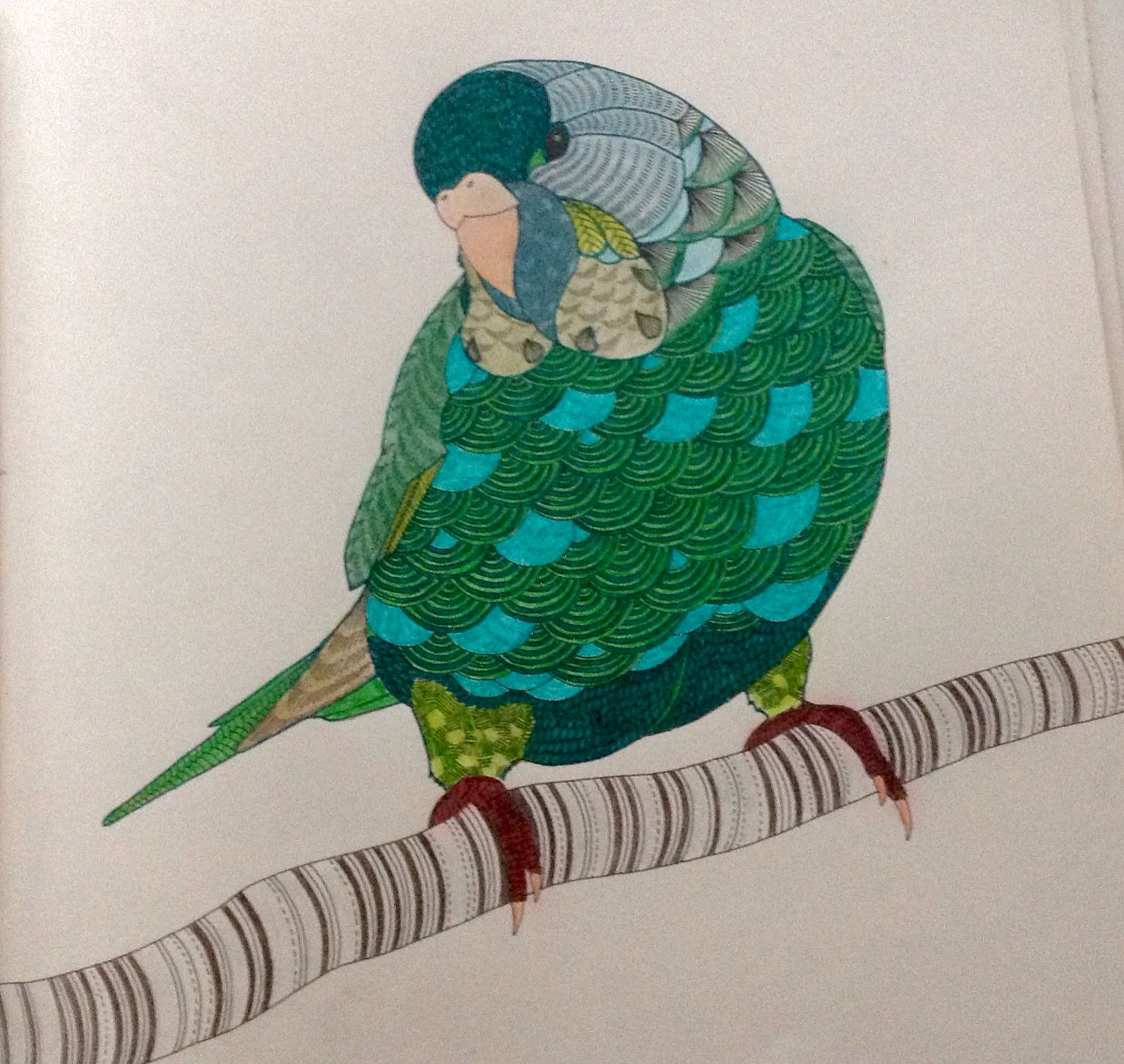 Millie Marotta Dierenrijk Kleurboek Okki Animal Kingdom Colouring Book Millie Marotta Animal Kingdom Millie Marotta