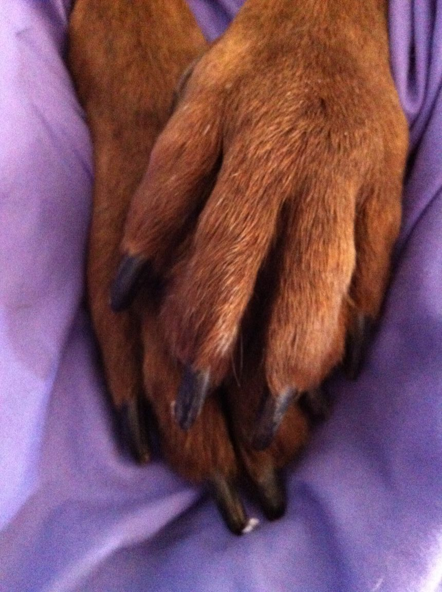 My pup's paws