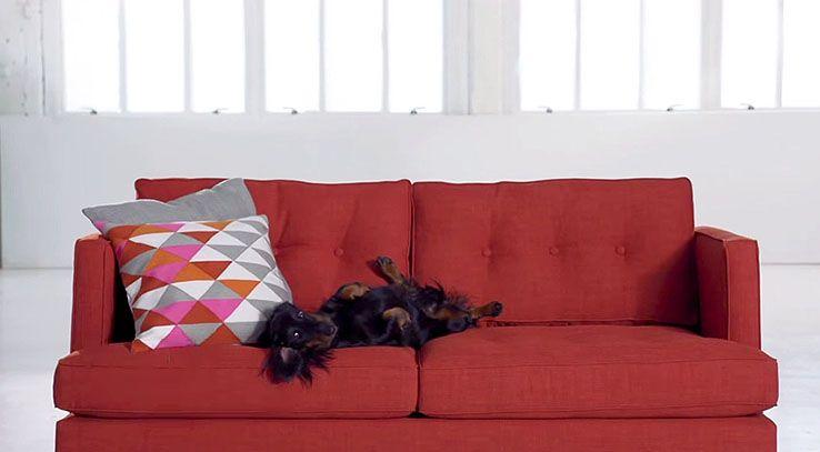 West Elm Pets on Sofas Video