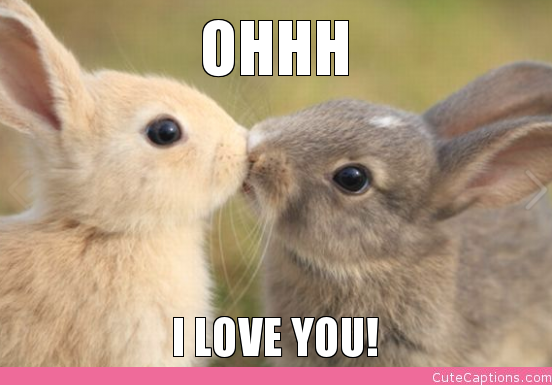 Romantic Cute Animals With Captions Cute Love Animal Pictures With Captions Pinterest Cute Animals With Captions Cute Love Animal Pictures With Captions