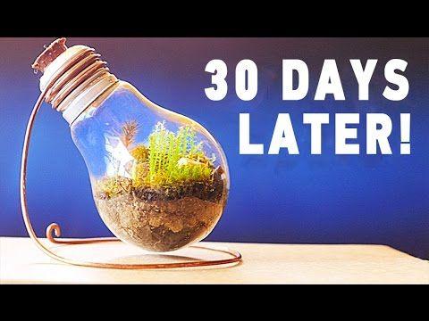 Eternal Terrarium 30 Days Later Youtube Mini